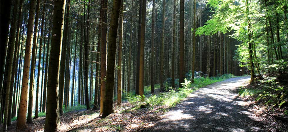 Wandern und Natur geniessen