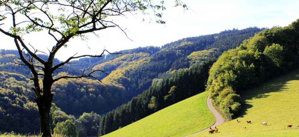 Ausblick und Natur im Schwarzwald